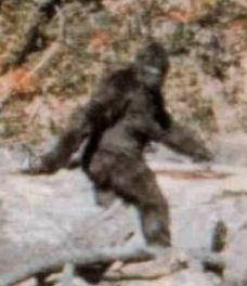 You're right, a creature that there is no scientific evidence of existing is real, because we saw these grainy videos.