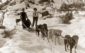 Dog-Sled-Team